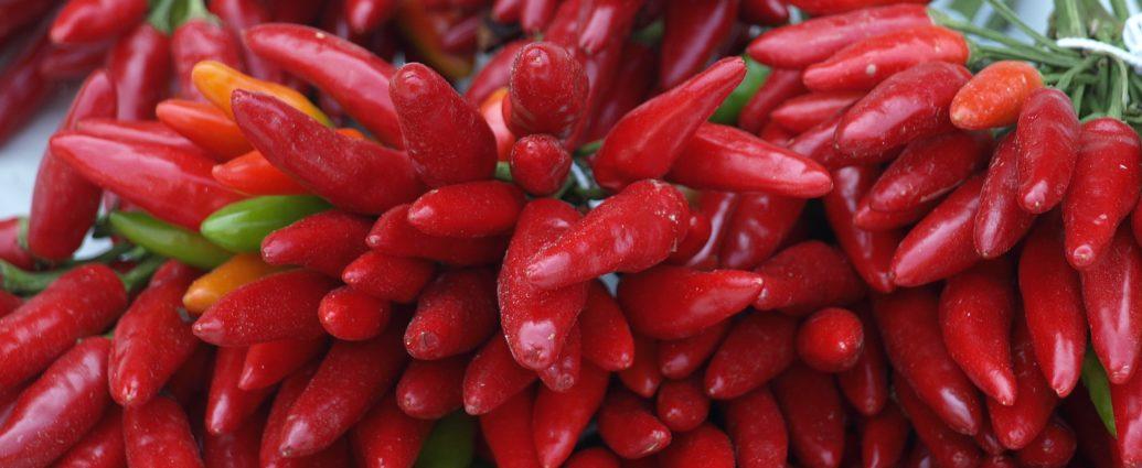 Chili Aussaat