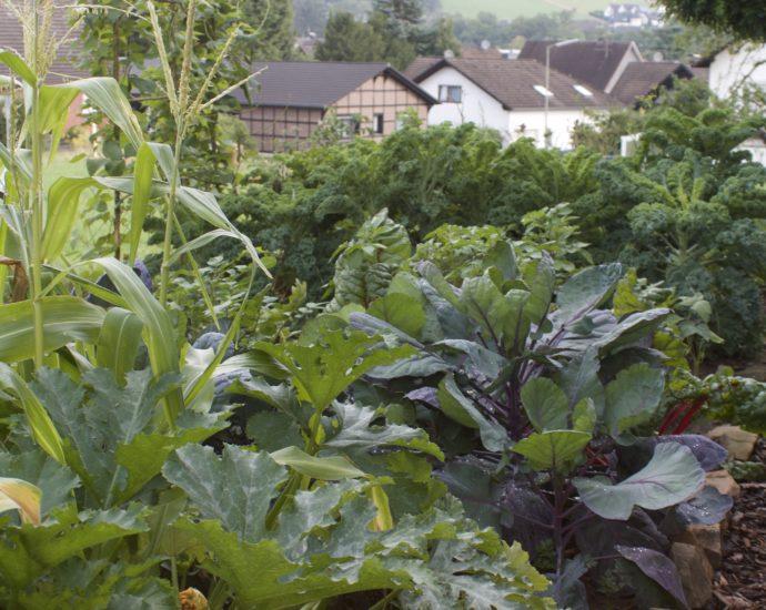 Gemüsegarten Mischkultur